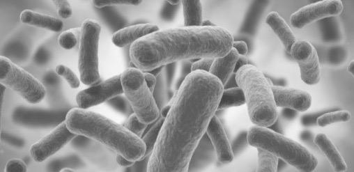 dentiste buccal bactéries microbiote santé docteur Ludovic Ha Anglet Blancpignon coronavirus covid covid-19